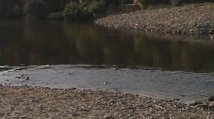 river Ballyconnigar